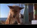 Дельфин спас собаку!