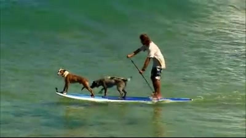 Pan surfař...