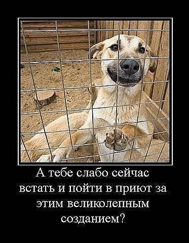 не бойтесь брать животных из приюта стихи малый вес компактные