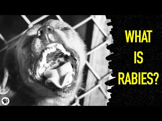 What Happens When You Get Rabies