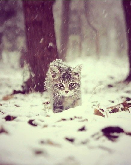 Зимние котики????❤