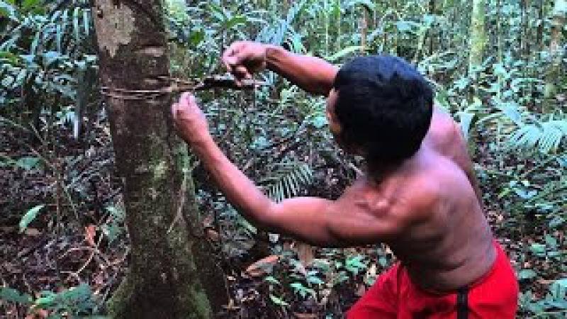 Pantanal Sopravvivere All'Estremo Documentario Nat Geo Wild ITA