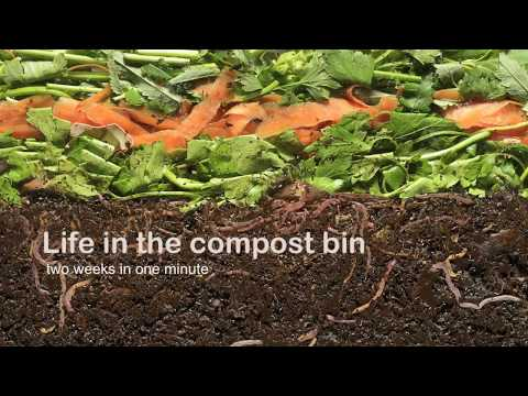 Vermicompost Life in the compost bin
