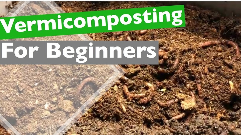 Vermicomposting for beginners Adding Worms to Your Bin
