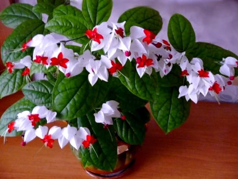 Красивейший комнатный цветок, который цветет почти круглый год, изображение №3