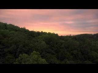 Drone fly above trees and ocean - stock video free download (720p).mp4