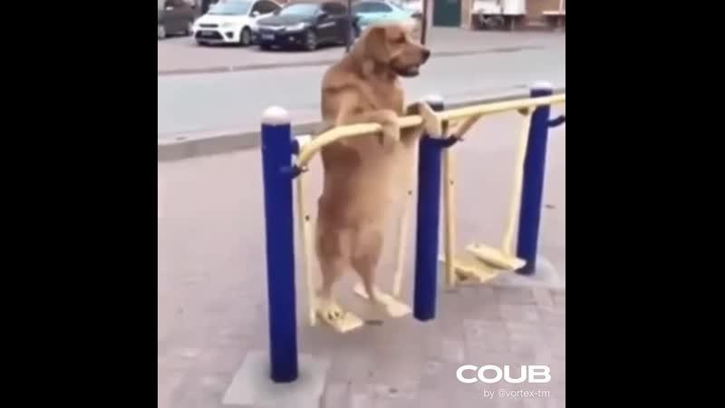 Собака Физрука.