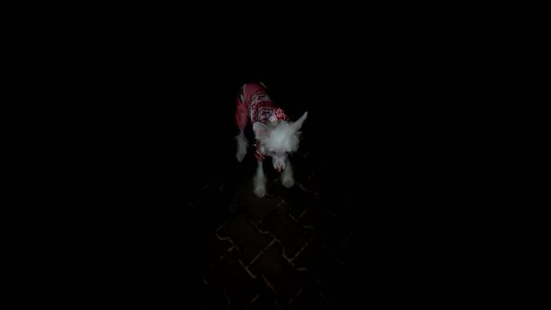 Wera is as stubborn as a donkey Wera jest uparta jak osioł