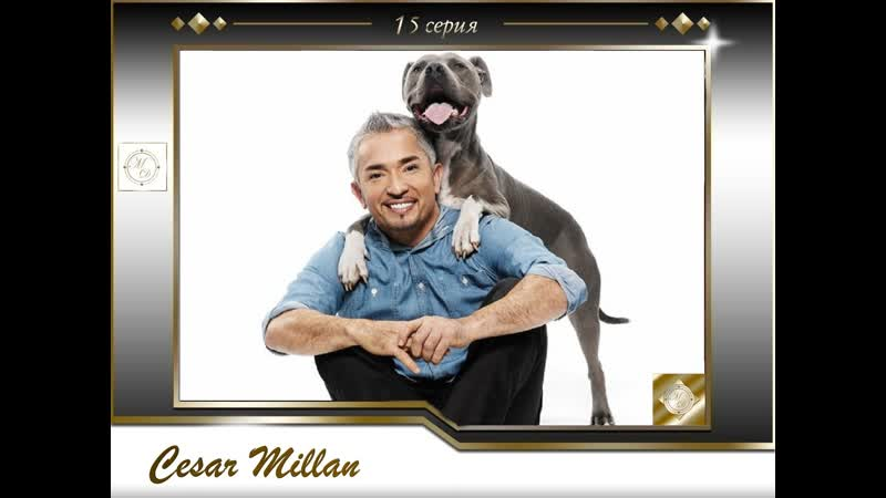 15 серия Сезар Миллан Переводчик с собачьего Niki