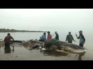 В желудке кита найдены 6 килограммов пластика