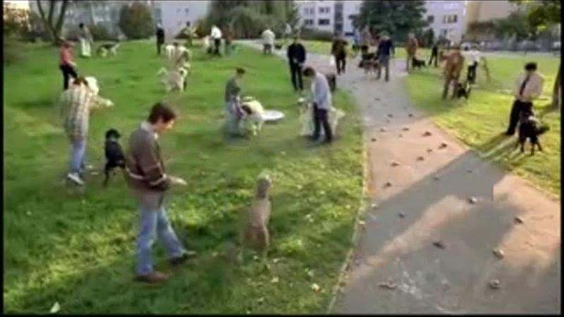 Dzień Świra psie kupy na chodniku