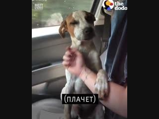 Собачка которую только что спасли говорит спасибо