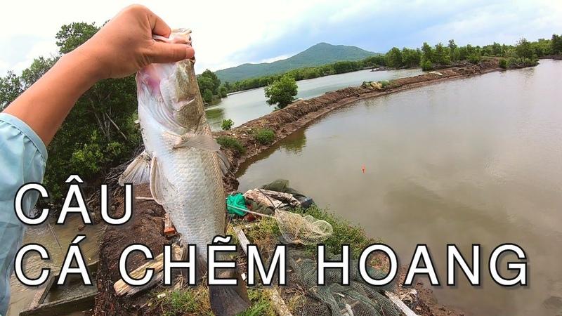 Câu cá vược chẽm hoang bằng chai nhựa và cái kết bất ngờ fishing barramundi