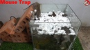 Mouse Trap Handmade with Glass Water Automatic saving a lot of Rat Electric Trap