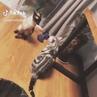 🐈🥋🐈 · coub, коуб Животные Коты Кошки Драка