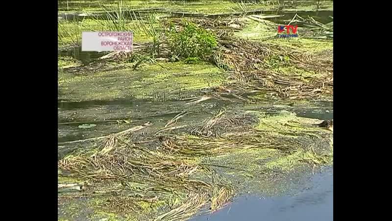 ОНФ подключился к решению экологической проблемы в Острогожском районе