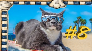 Смешные коты, Приколы 2021, коты под музыку, Shkiper Smile выпуск #8