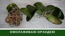 Омоложение Орхидеи Как меня обманул ЦветкоFF отзыв