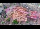 Ace Ventura @ Ozora Festival 2019 _full set movie_ ( 720 X 1280 )