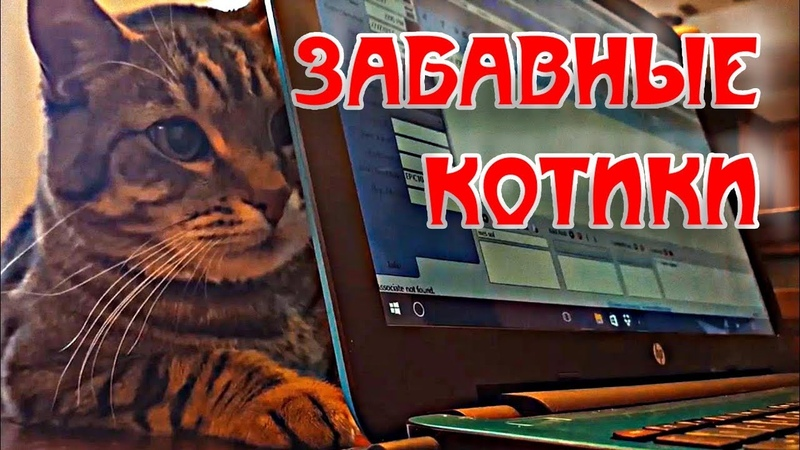 Подборка приколов с веселыми котами смешные котики играют коты funny cats compilation challenge заба