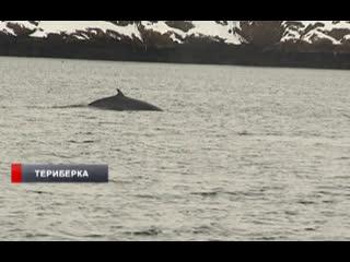 Фонд защиты китов побывал в Териберке