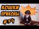 Приколы с Кошками Котами ДО СЛЁЗ Смешные Видео Коты Кошки 2017
