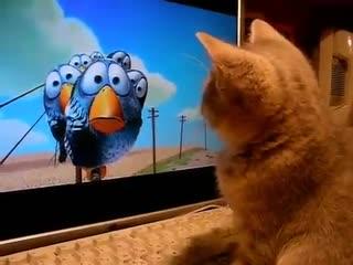 """Котёнок смотрит мультфильм """"О Птичках"""""""