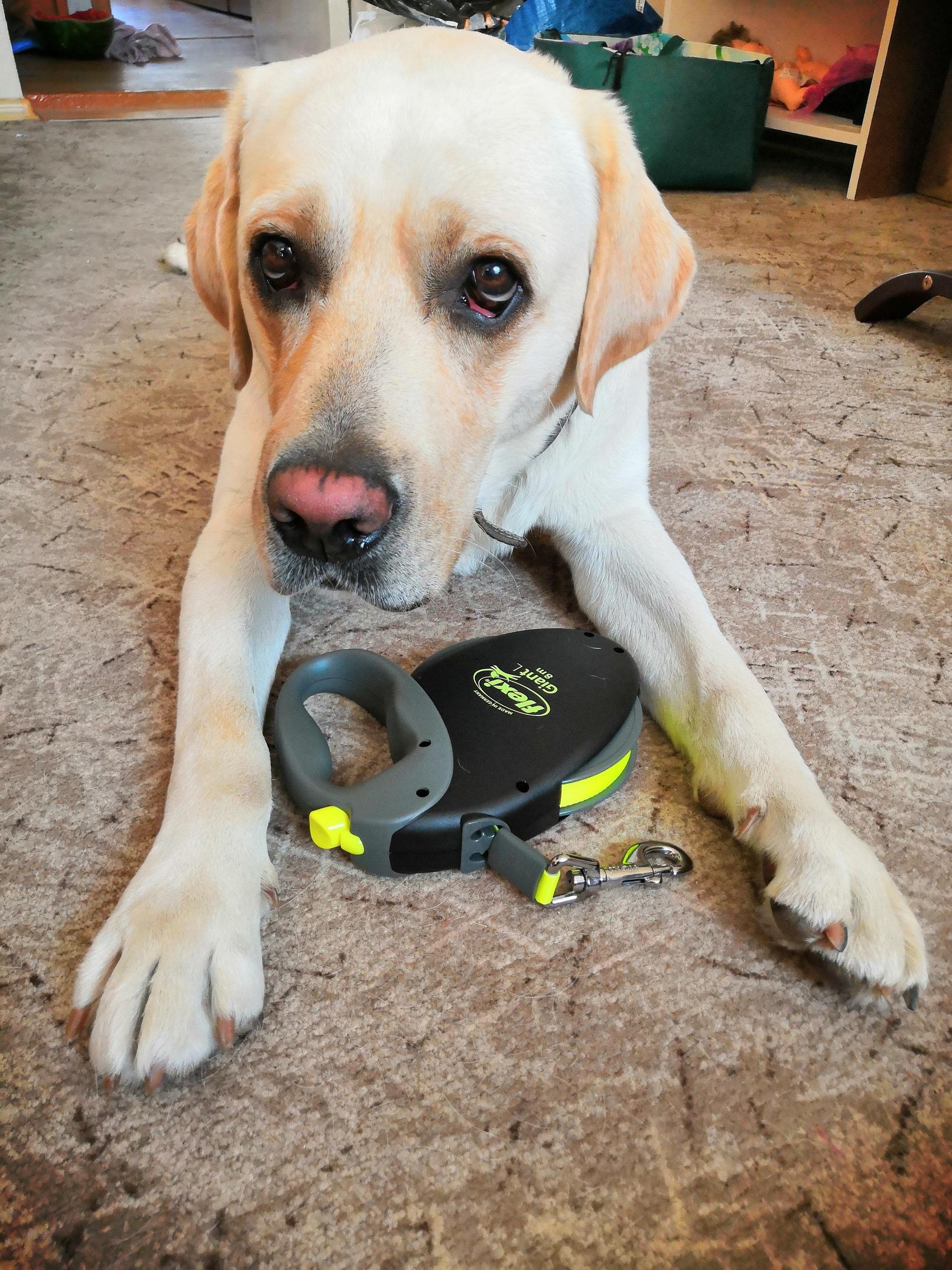 Артур знакомится с новой рулеткой