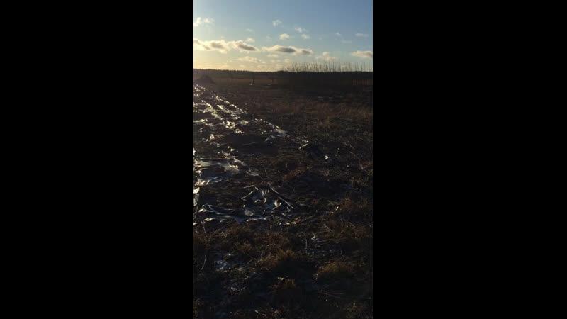 Вывозим прут с плантации Зима 2020