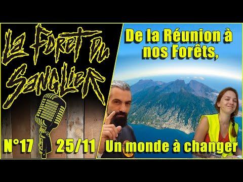 DE LA RÉUNION A NOS FORETS La Forêt du Sanglier n°17
