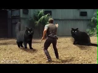 видео с котиками всегда лучшие