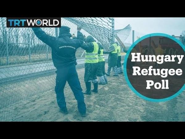Refugee Crisis Hungarian attitude to refugees bucks international trend