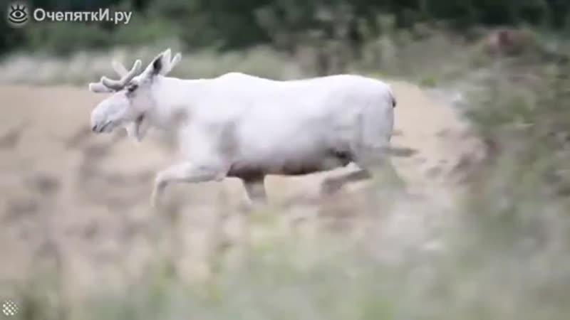 Лось аРьбинос Рруппа Опасная ПРанета