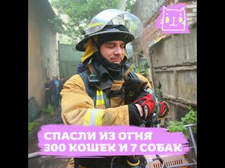 Пожар в приюте Брошенный ангел: спасли из огня 300 кошек и 7 собак