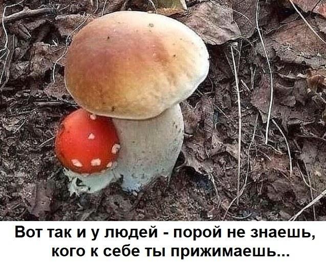 https://sun9-37.userapi.com/c855328/v855328470/b5c07/Oup7CxyHwm8.jpg
