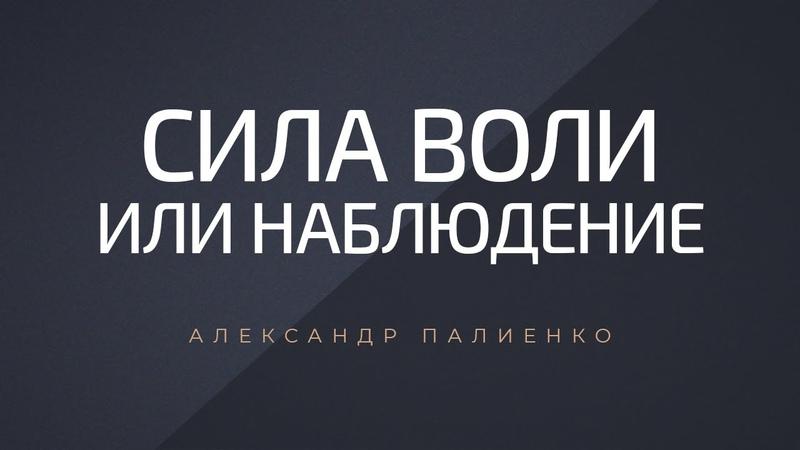 Сила воли или наблюдение. Александр Палиенко.