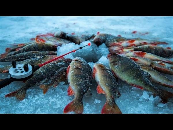 Лунка удочка наживка… югорчан пригласили на рыбный батл