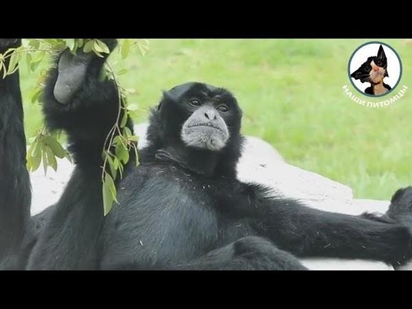 Релакс по обезьяньи 👍😜😂 Обезьяна отдыхает Обезьяны приколы 😀