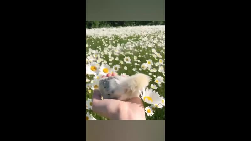 Цыплёнок и цветочки