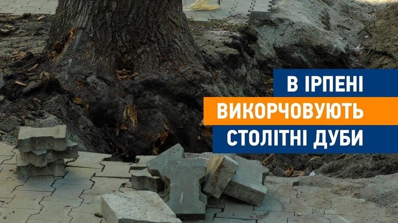 В Ірпені продовжують нищити столітні дуби