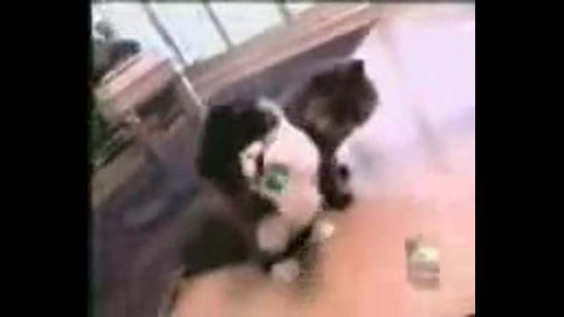 Animal Planet show on Susan Ward's cats called Amazing Tails 1998, фрагмент