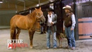 EP 02 Better Horses with Ernie Rodina Tour of Silver Spurs Equine