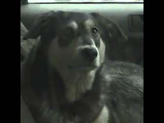 Житель Подмосковья поселил собаку в машине