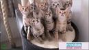 Смешное видео про кошек и котов.