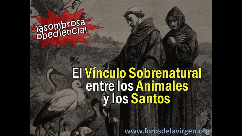 El Vínculo Sobrenatural entre los Animales y los Santos ¡asombrosa obediencia