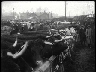 Cattle Show (1918)