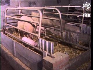 Factory Farming (1970-1979)