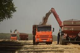 Уборка зерновых в Липецкой области перешагнула экватор