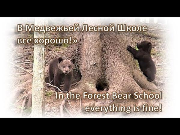 МЕДВЕЖАТА-СИРОТЫ: в Медвежьей Лесной Школе все хорошо!