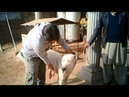 Bully kutta POWER